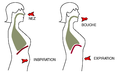 Respiration abdominale {PNG}